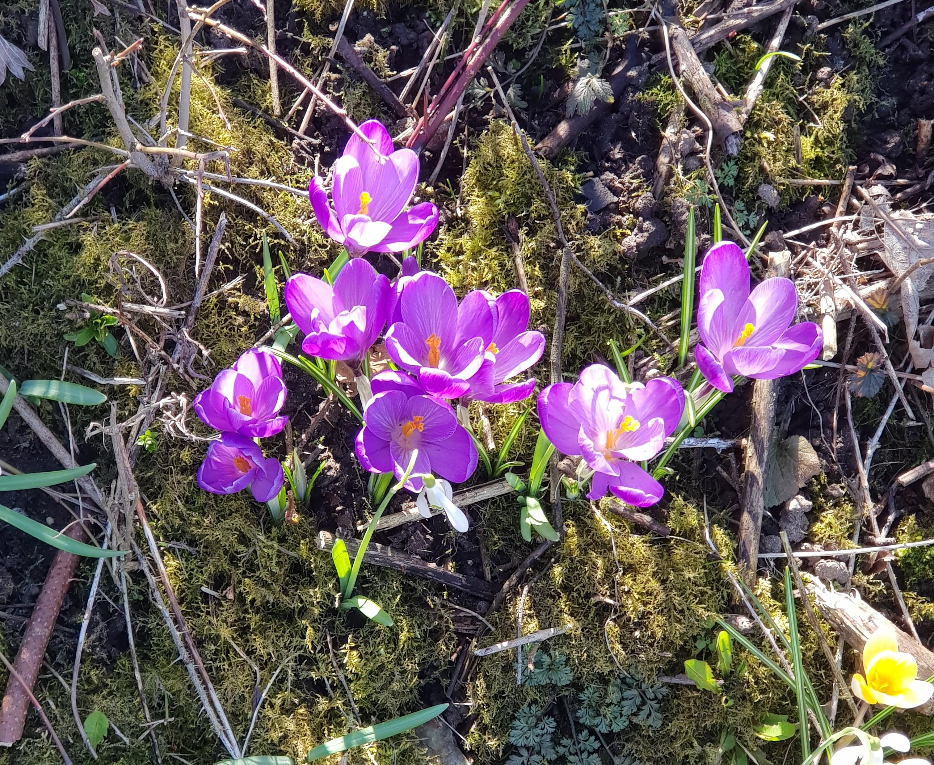 Frühlingserwachen im Möösliholz